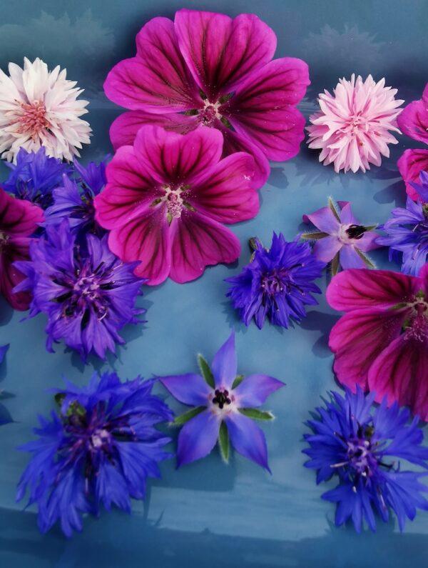 Eetbare bloemen paars en roze