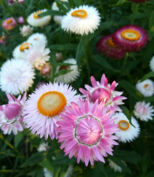 Strobloemen