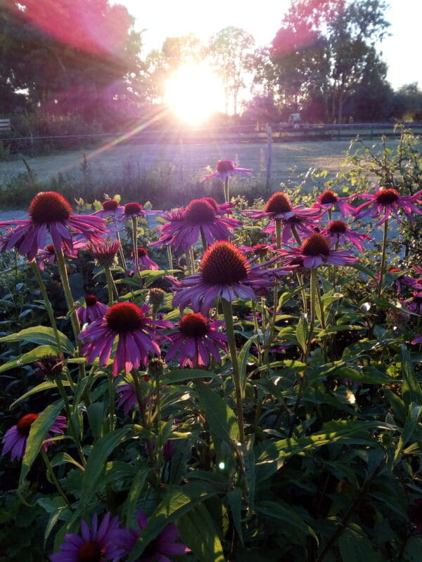 Zonnehoed bij zonsondergang