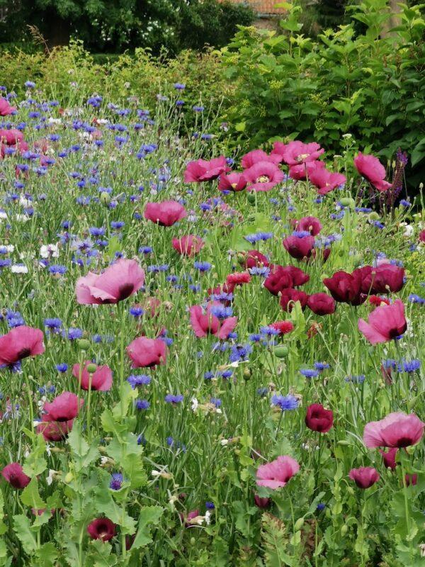 Bijenmix in de tuin