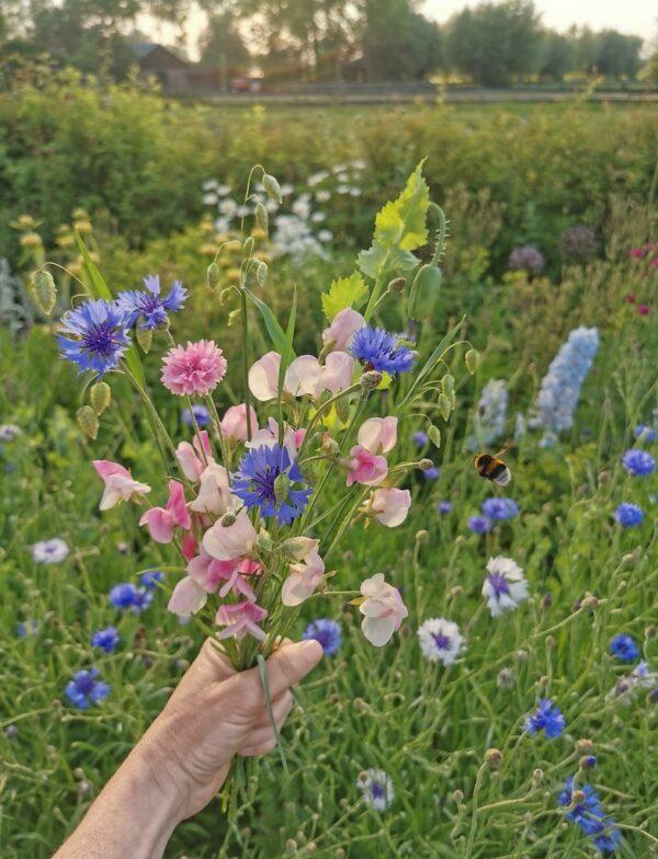 Siererwt bosje plukbloemen